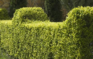 architectural hedge cutting services