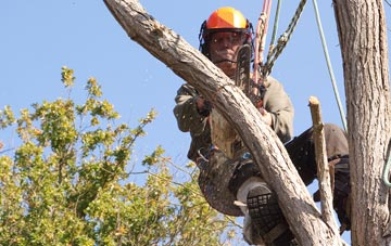 finding qualified Wembley tree surgeons