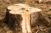 compare tree stump removal costs