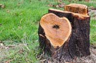 free Wembley tree stump removal quotes