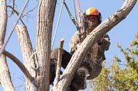 Wembley tree surgeon services